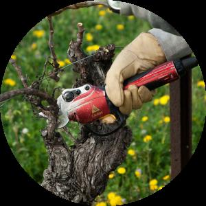 庭木の剪定イメージ